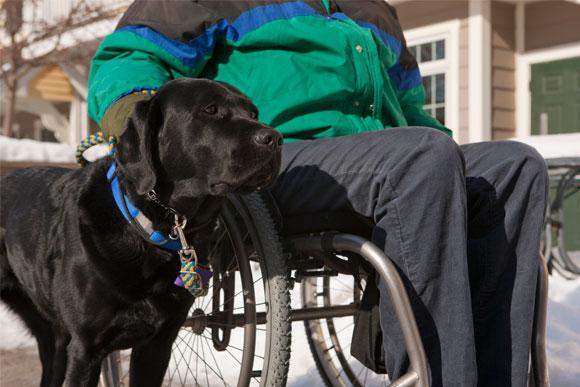 Service dog with Veteran